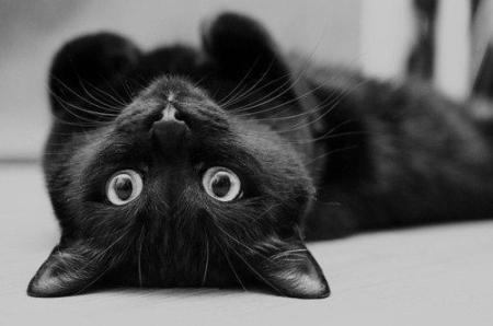 cute-black-cat